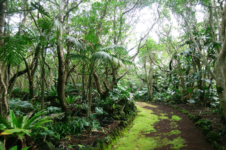 亜熱帯の森