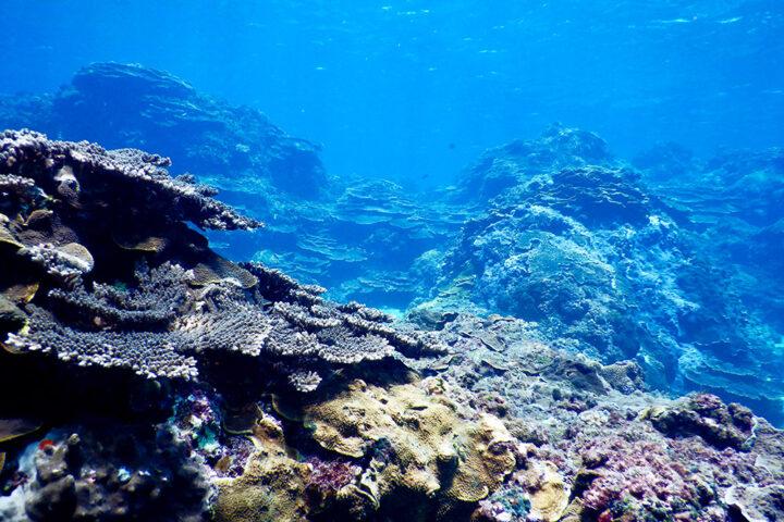 三宅島の海
